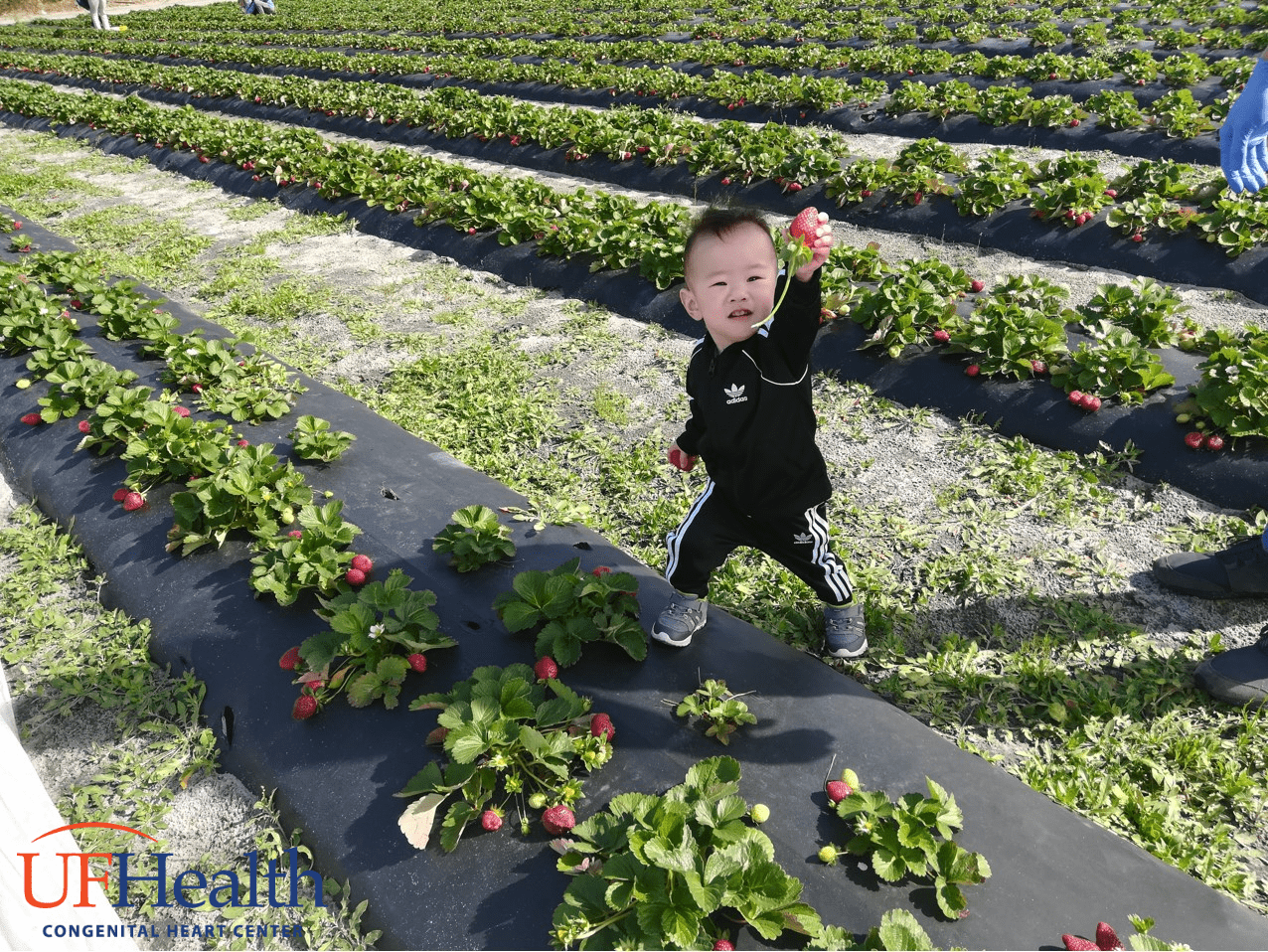 photo of Hunter in strawberry patch